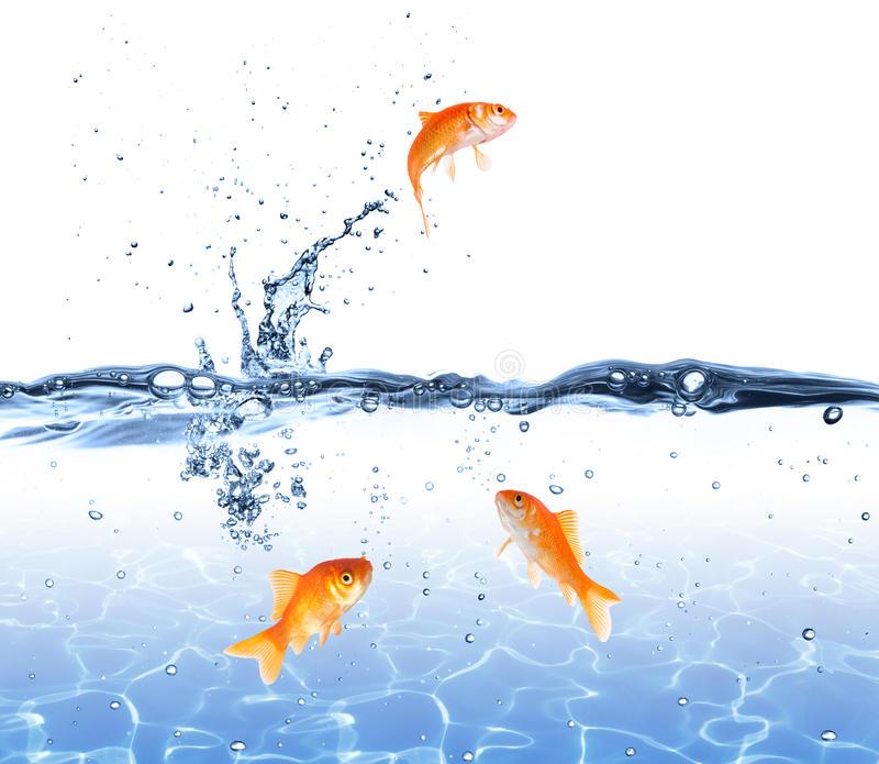 el-saltar-del-pez-de-colores-del-agua-escape-el-concepto-37675243[1]