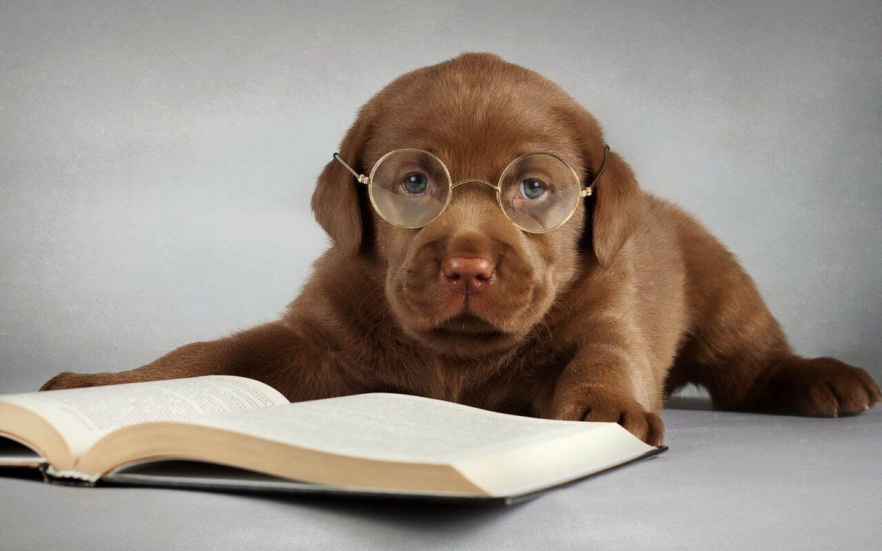hond achter boeken